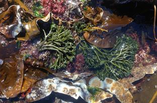 Diverse seaweeds