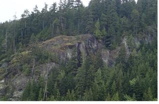 Woodland Cliff