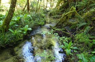 Riparian Creek