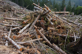 Log debris piled for burning